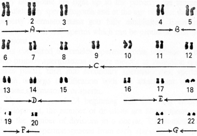 http://www.herenow4u.net/fileadmin/v3media/pics/Books_online/The_Science_of_Karma-Genetics/Fig.15.jpg