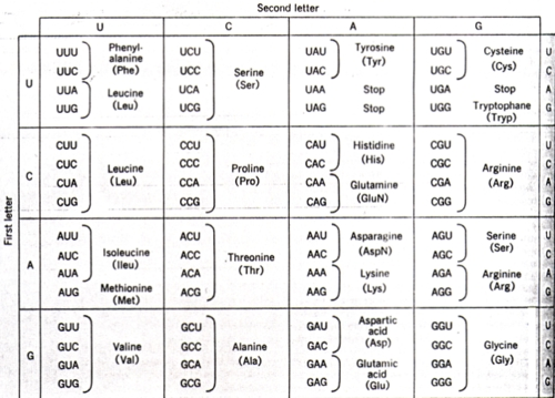 U555U | Images: Dna Amino Acid Chart